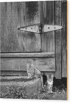 Wood Print featuring the photograph Barn Cats by Pete Hellmann