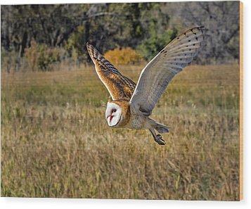 Barn Owl Flight 6 Wood Print