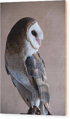 Wood Print featuring the photograph Barn Owl by Monte Stevens