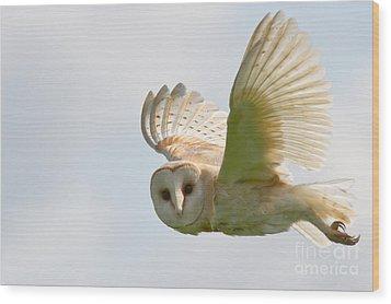 Barn Owl Wood Print by Ruth Hallam