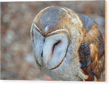 Barn Owle 1 Wood Print by Marty Koch