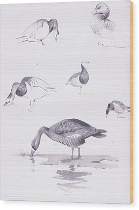 Barnacle And White Fronted Geese Wood Print by Archibald Thorburn