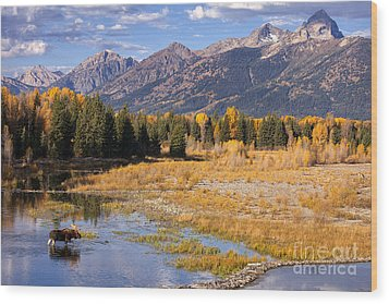 Bull In The Beaver Ponds Wood Print