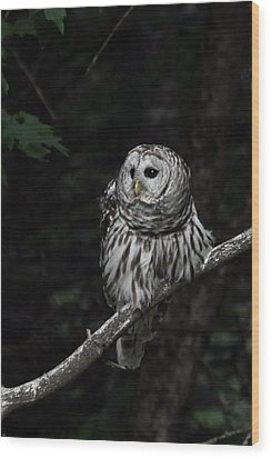Wood Print featuring the photograph Barred Owl 2 by Glenn Gordon