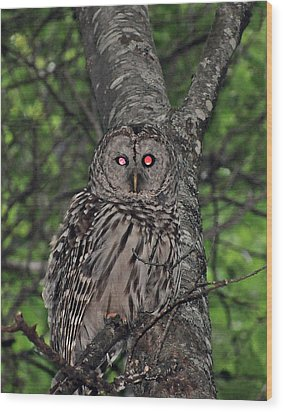 Wood Print featuring the photograph Barred Owl 3 by Glenn Gordon