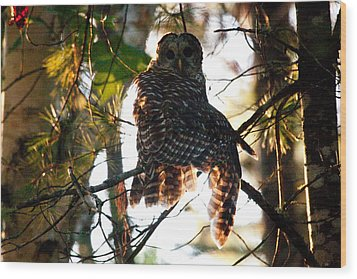 Barred Owl At Sunrise Wood Print by Brent L Ander