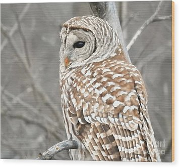 Barred Owl Close-up Wood Print by Kathy M Krause