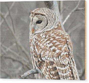 Barred Owl Close-up Wood Print