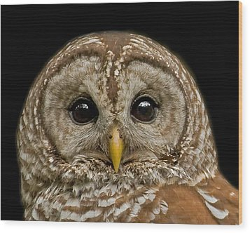 Barred Owl Fledgling Wood Print by Larry Linton