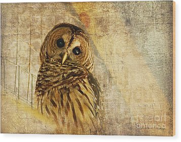 Barred Owl Wood Print by Lois Bryan