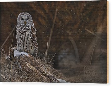 Wood Print featuring the photograph Barred Owl On Log by Michael Cummings