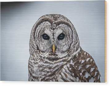 Wood Print featuring the photograph Barred Owl by Paul Freidlund