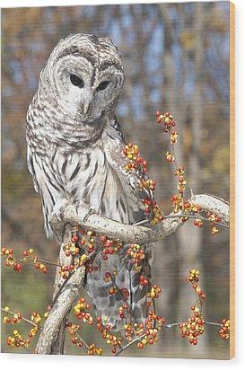 Barred Owl Portrait Wood Print by Cindy Lindow