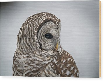 Wood Print featuring the photograph Barred Owl Portrait by Paul Freidlund