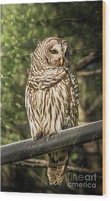 Barred Owl Wood Print by Robert Frederick