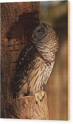 Barred Owl Sleeping In A Tree Wood Print by Chris Flees