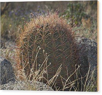 Barrel Cactus Wood Print by Kelley King