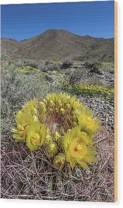 Wood Print featuring the photograph Barrel Cactus Super Bloom by Peter Tellone