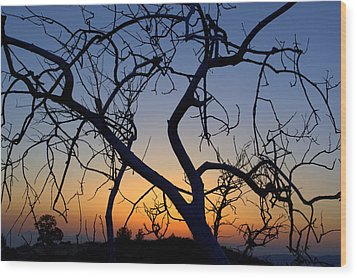 Wood Print featuring the photograph Barren Tree At Sunset by Lori Seaman