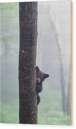 Bashful Bear Cub - Fs000230 Wood Print