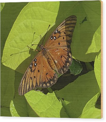 Wood Print featuring the photograph Basking Butterfly by Michael Flood