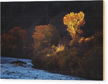 Wood Print featuring the photograph Basking In The Light by Andrew Soundarajan