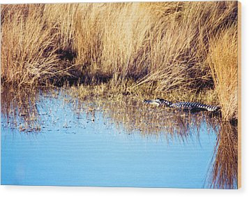 Basking In The Sun Wood Print by Jan Amiss Photography