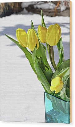 Wood Print featuring the photograph Basking In The Sunshine by Traci Cottingham