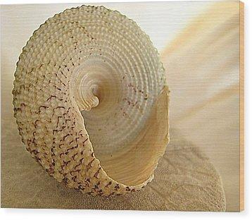 Basking Seashell Wood Print