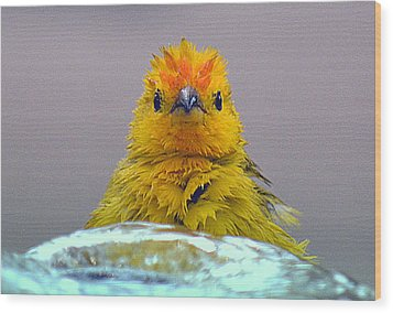 Wood Print featuring the photograph Bath Time Finch by Lori Seaman