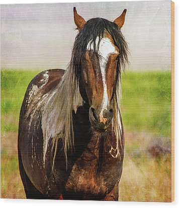 Wood Print featuring the photograph Battle Worn Stallion by Mary Hone