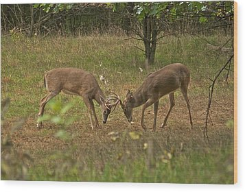 Battling Whitetails 0102 Wood Print by Michael Peychich