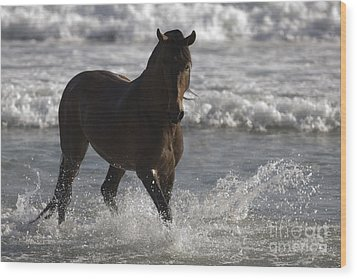 Bay Andalusian Stallion In The Surf Wood Print by Carol Walker