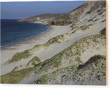 Bay Beach And Sand Dunes Wood Print by Don Kreuter