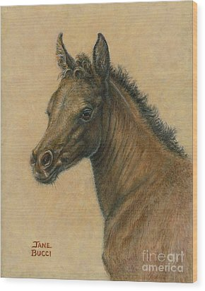 Wood Print featuring the painting Bay Colt by Jane Bucci