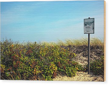Wood Print featuring the photograph Be Kind To The Dune Plants by Madeline Ellis