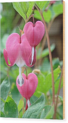 Wood Print featuring the photograph Be Still My Little Bleeding Heart by Margaret Bobb
