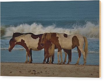 Beach Bum Ponies Wood Print by William Bartholomew