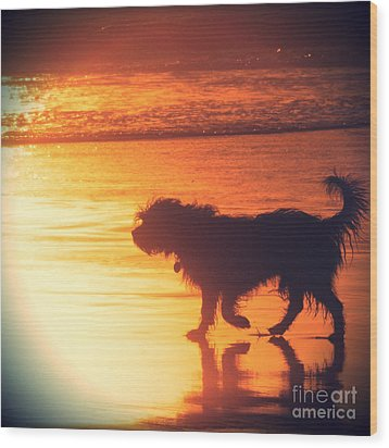 Beach Dog Wood Print by Paul Topp