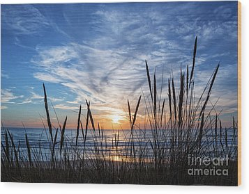 Beach Grass Wood Print by Delphimages Photo Creations