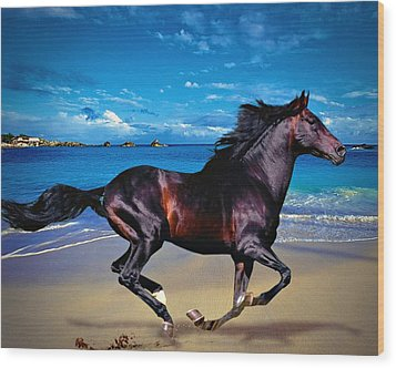 Beach Horse Wood Print by Robert Smith