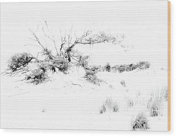 Beach Morning Lone Tree On Dune Wood Print by Randy Steele
