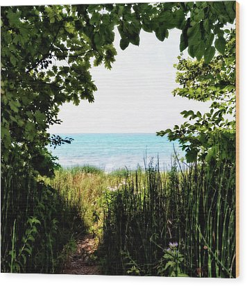 Wood Print featuring the photograph Beach Path With Snake Grass by Michelle Calkins