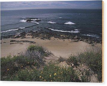 Beach Reef Point Wildflowers Wood Print by Don Kreuter
