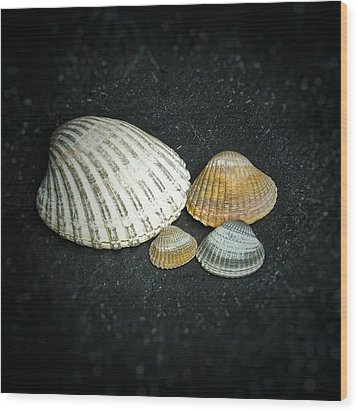Wood Print featuring the photograph Beach Treasures  by Karen Stahlros