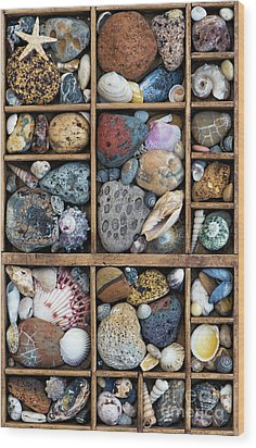 Wood Print featuring the photograph Beach Treasures by Tim Gainey