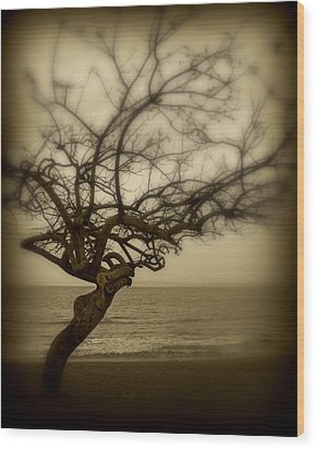 Beach Tree Wood Print by Perry Webster