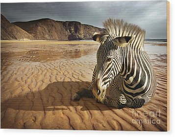Beach Zebra Wood Print by Carlos Caetano