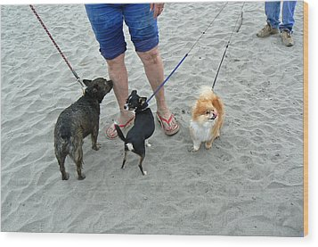 Beachen Toy Doggies Wood Print by Pamela Patch