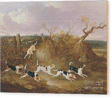 Beagles In Full Cry Wood Print by John Dalby